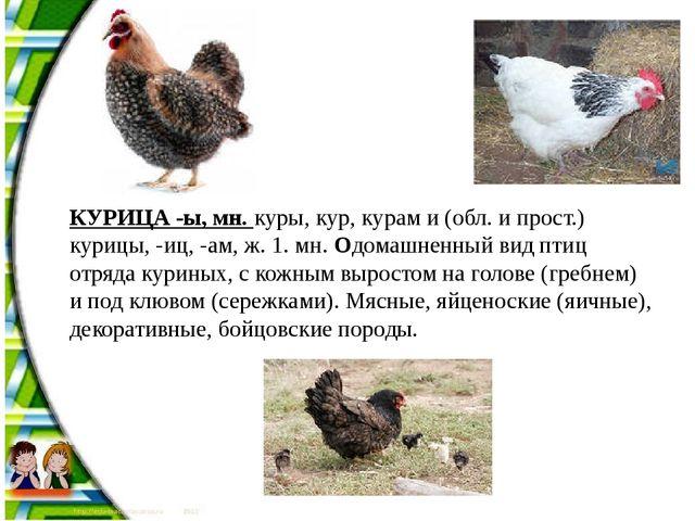 КУРИЦА -ы, мн. куры, кур, курам и (обл. и прост.) курицы, -иц, -ам, ж. 1. мн....