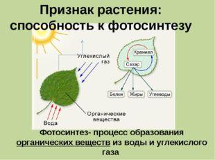 Признак растения: способность к фотосинтезу Фотосинтез- процесс образования