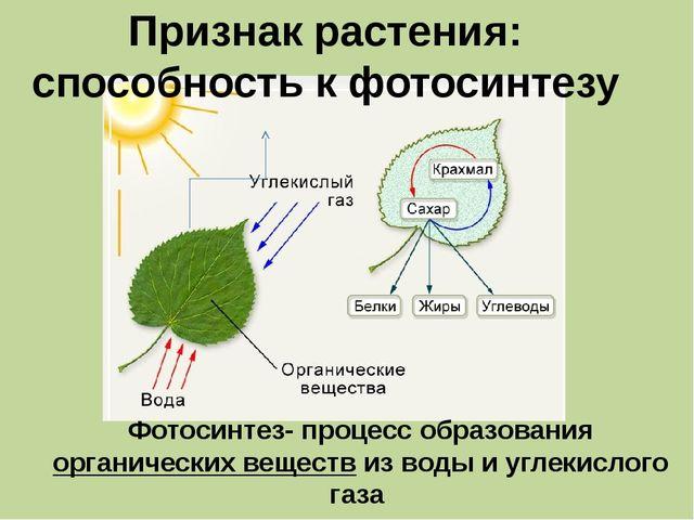 Признак растения: способность к фотосинтезу Фотосинтез- процесс образования...