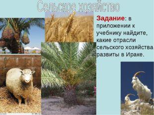 Задание: в приложении к учебнику найдите, какие отрасли сельского хозяйства р