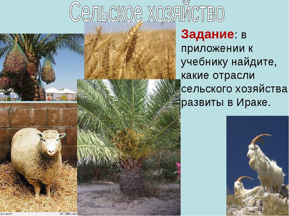 Задание: в приложении к учебнику найдите, какие отрасли сельского хозяйства р...