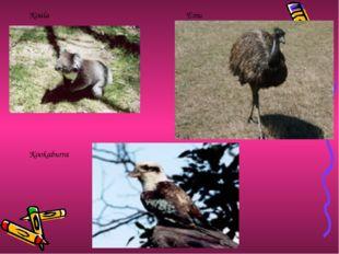 Koala Kookaburra Emu