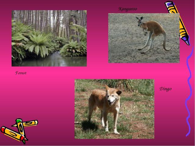 Kangaroo Dingo Forest