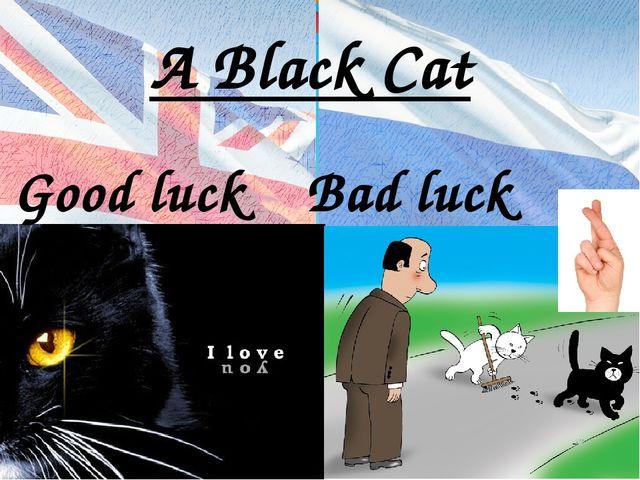 A Black Cat Good luck Bad luck