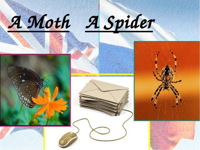 A Moth A Spider