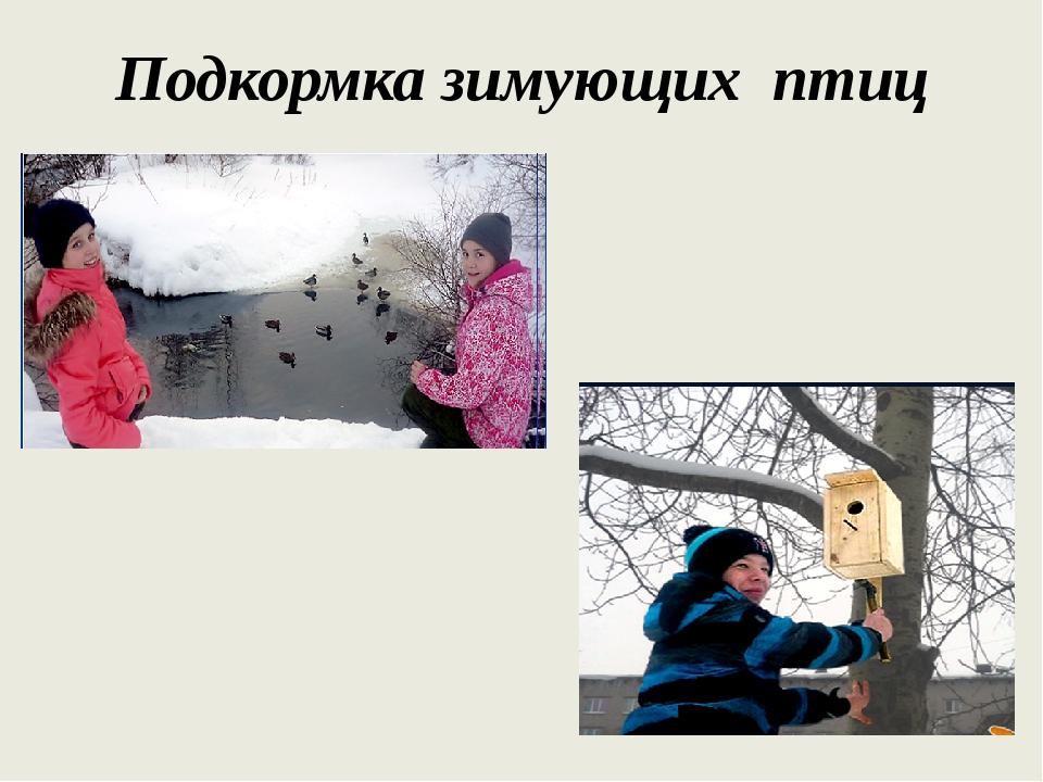 Подкормка зимующих птиц