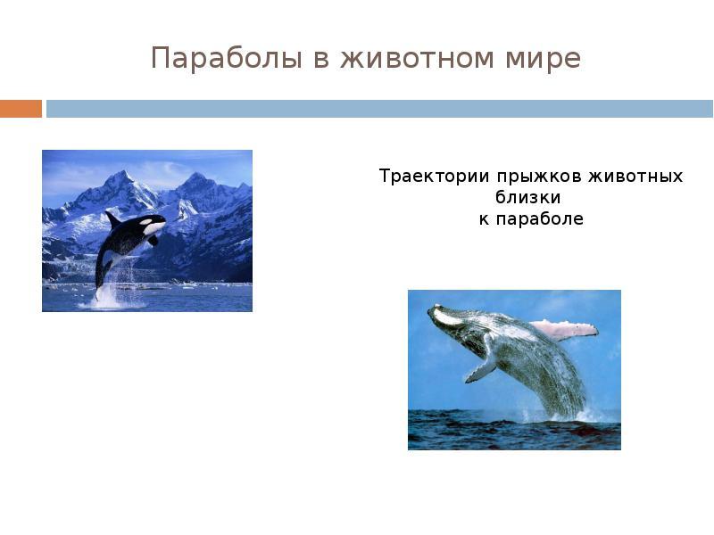 hello_html_7aa64b29.jpg