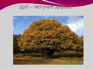 Дуб – могучее дерево.