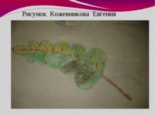 Рисунок Кожевникова Евгения