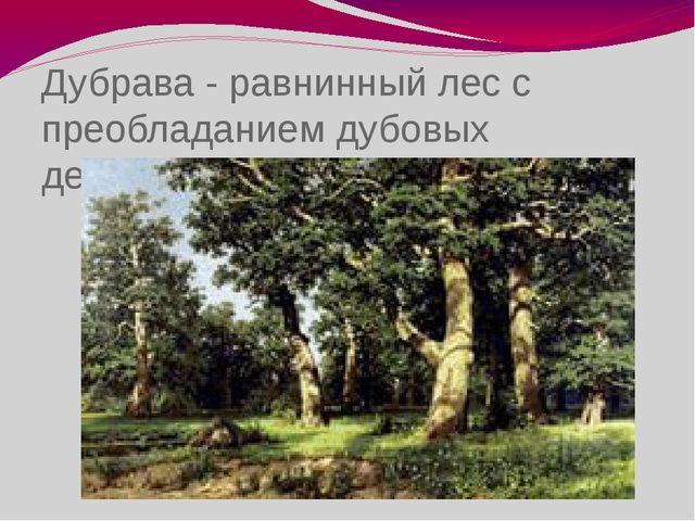 Дубрава - равнинный лес с преобладанием дубовых деревьев.