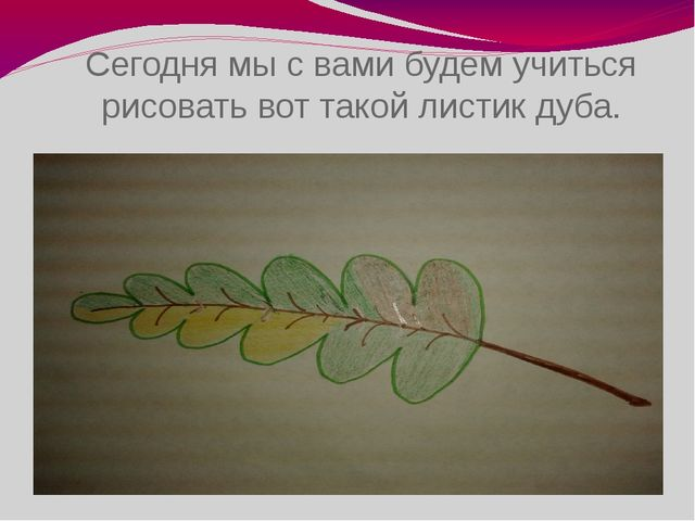 Сегодня мы с вами будем учиться рисовать вот такой листик дуба.