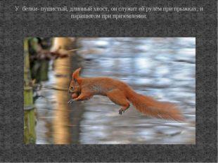 У белки- пушистый, длинный хвост, он служит ей рулём при прыжках, и парашютом