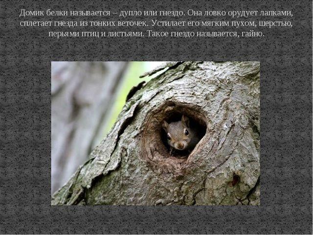 Домик белки называется – дупло или гнездо. Она ловко орудует лапками, сплетае...