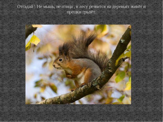 Отгадай ! Не мышь, не птица , в лесу резвится на деревьях живёт и орешки грыз...