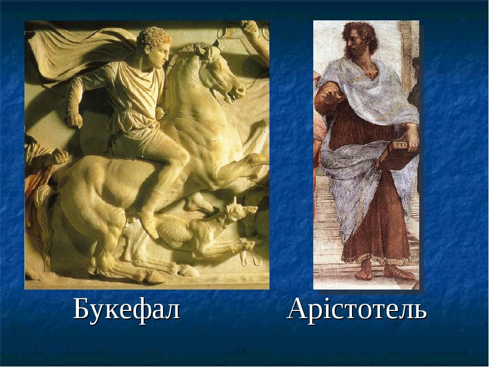 Букефал Арістотель