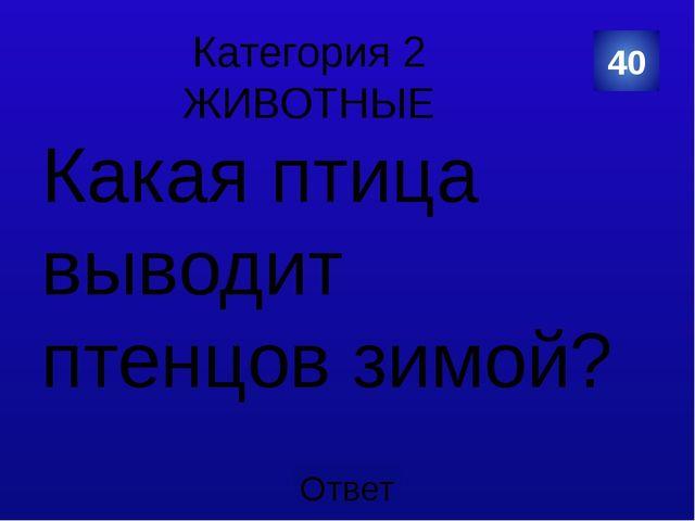 Категория 5 СПОРТ Назовите имя русского ЦАРЯ, который в Голландии очень полюб...