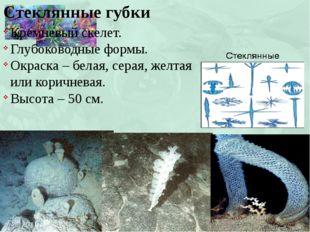 Стеклянные губки Кремневый скелет. Глубоководные формы. Окраска – белая, сера