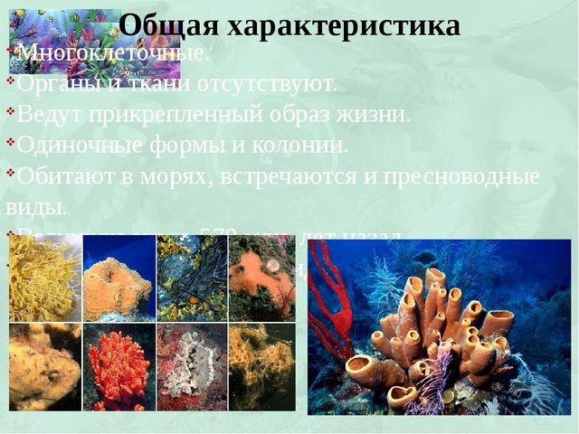 Многоклеточные. Органы и ткани отсутствуют. Ведут прикрепленный образ жизни....