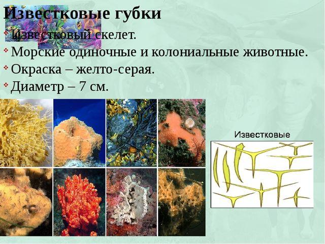 Известковые губки Известковый скелет. Морские одиночные и колониальные животн...