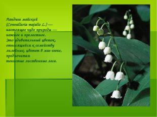 Ландыш майский (Convallaria majalis L.) — настоящее чудо природы — нежное и п