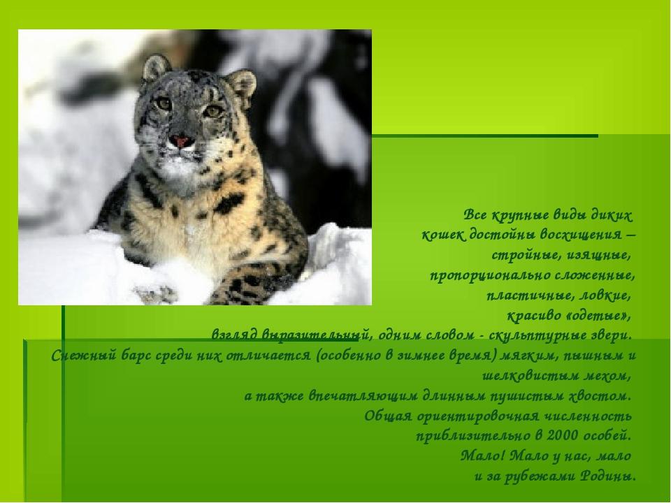 Все крупные виды диких кошек достойны восхищения – стройные, изящные, пропор...