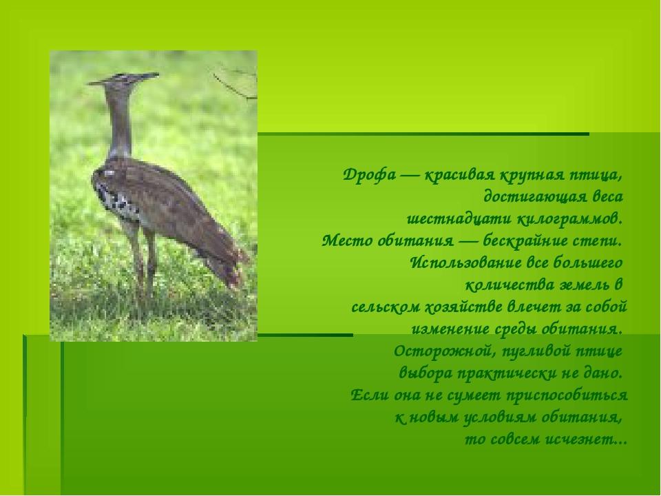 Дрофа — красивая крупная птица, достигающая веса шестнадцати килограммов. Мес...