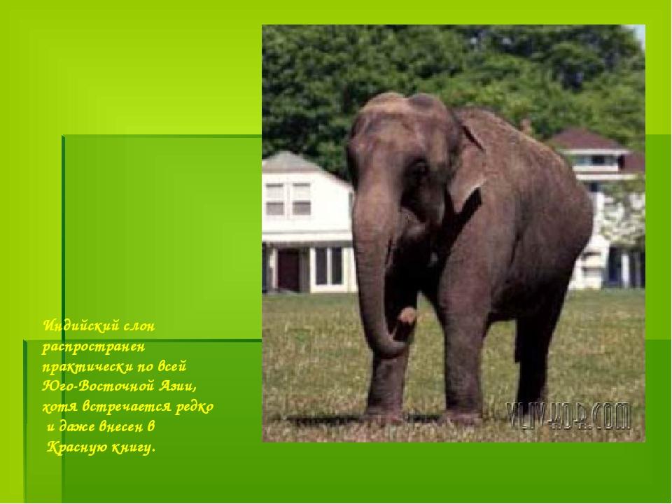 Индийский слон распространен практически по всей Юго-Восточной Азии, хотя вст...