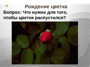 Рождение цветка Вопрос: Что нужно для того, чтобы цветок распустился? 1.Рожде