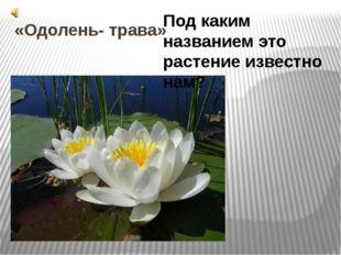 «Одолень- трава» Под каким названием это растение известно нам? 4. «Одолень—т