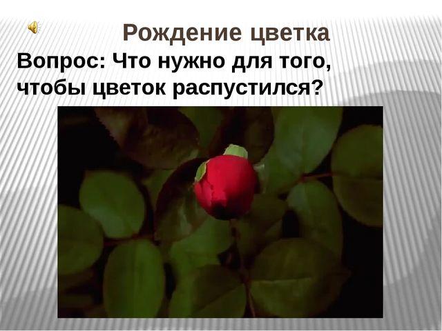 Рождение цветка Вопрос: Что нужно для того, чтобы цветок распустился? 1.Рожде...