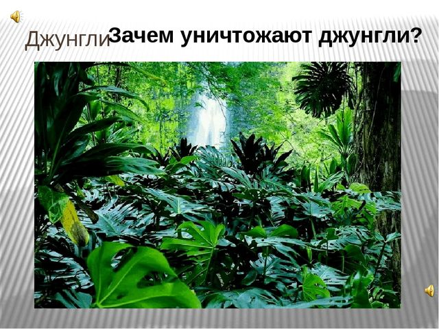 Джунгли Зачем уничтожают джунгли? 2.Джунгли Каждый год лес уничтожается (пол...