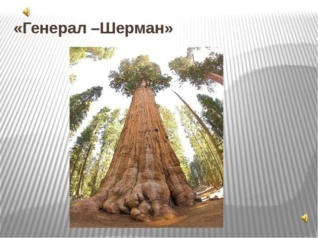 "«Генерал –Шерман» 6. Дерево ""Генерал Шерман"" Название этого дерева появилось..."