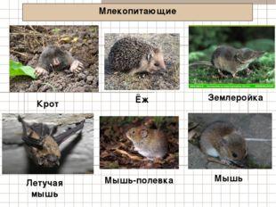Млекопитающие Крот Землеройка Летучая мышь Ёж Мышь-полевка Мышь
