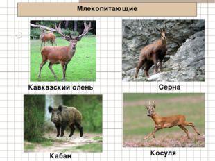 Млекопитающие Серна Косуля Кабан Кавказский олень