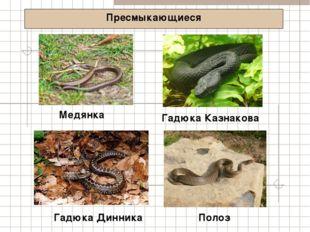 Пресмыкающиеся Медянка Полоз Гадюка Динника Гадюка Казнакова