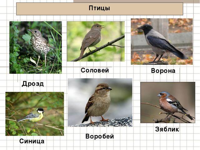 Птицы Дрозд Ворона Синица Соловей Воробей Зяблик