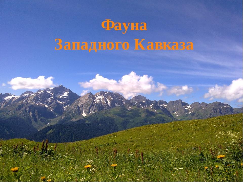 Фауна Западного Кавказа