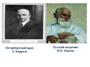 Петербургский врач А. Каррель Русский академик И.П. Павлов
