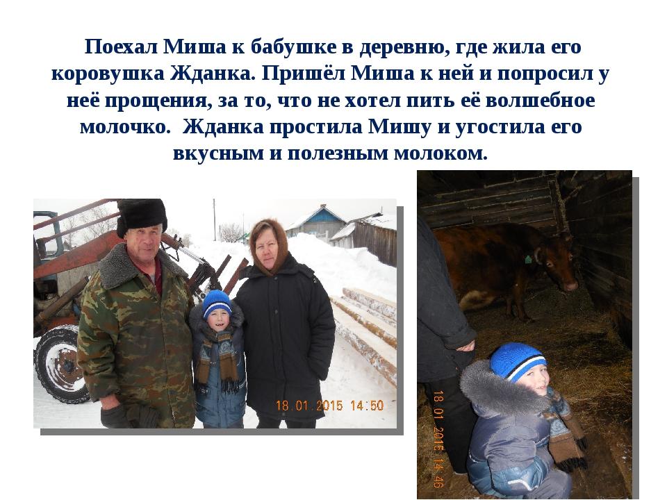 Поехал Миша к бабушке в деревню, где жила его коровушка Жданка. Пришёл Миша...