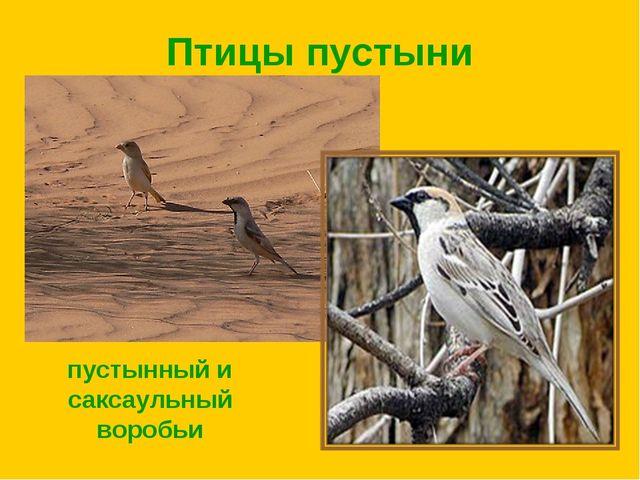 Птицы пустыни пустынный и саксаульный воробьи