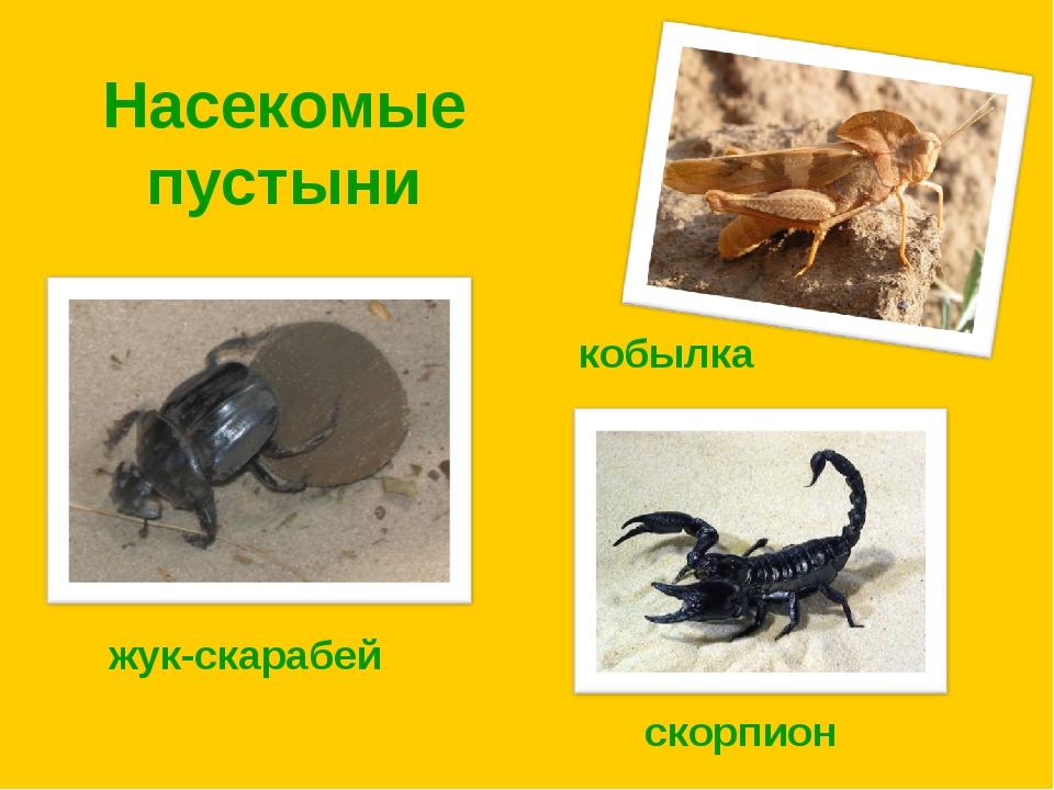Насекомые пустыни жук-скарабей кобылка скорпион