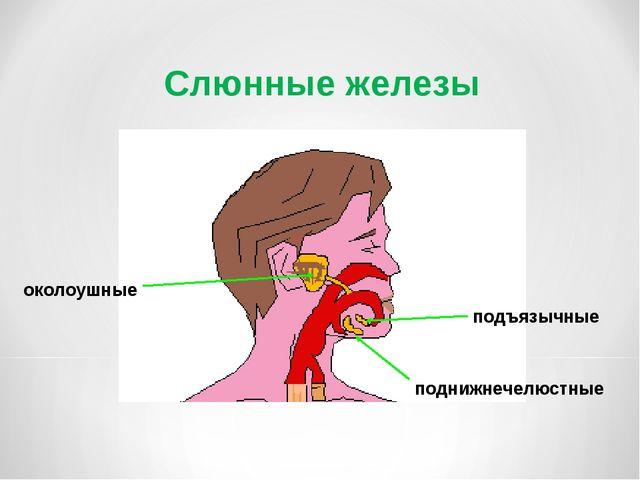 Слюнные железы околоушные подъязычные поднижнечелюстные