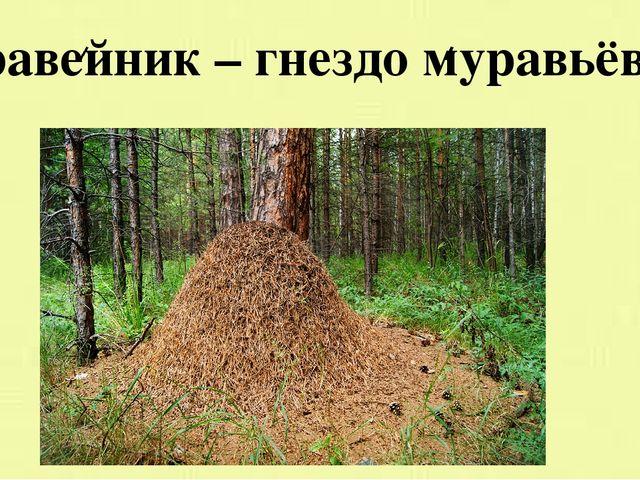 Муравейник – гнездо муравьёв.