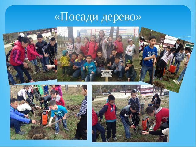 «Посади дерево»