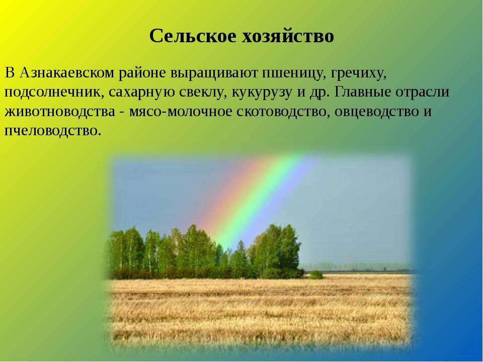 Сельское хозяйство В Азнакаевском районе выращивают пшеницу, гречиху, подсол...