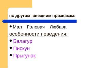 по другим внешним признакам: Мал Головач Любава особенности поведения: Балагу