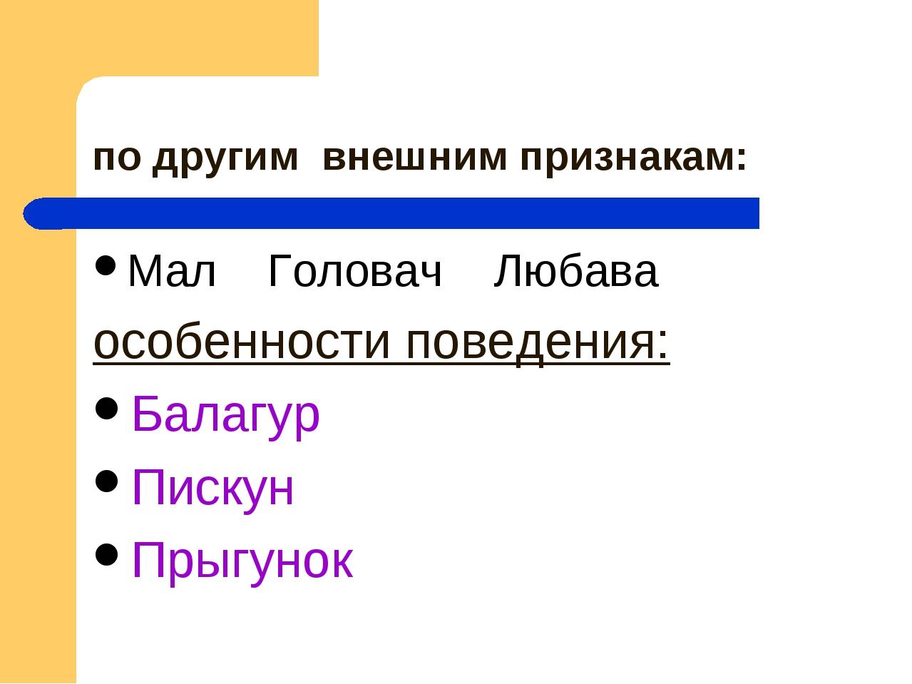 по другим внешним признакам: Мал Головач Любава особенности поведения: Балагу...