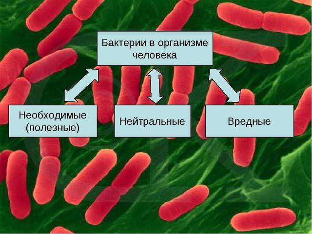 Бактерии в организме человека Необходимые (полезные) Нейтральные Вредные