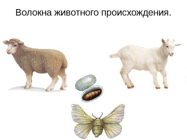 Волокна животного происхождения.