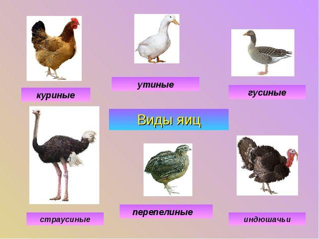 Виды яиц куриные утиные гусиные индюшачьи перепелиные страусиные